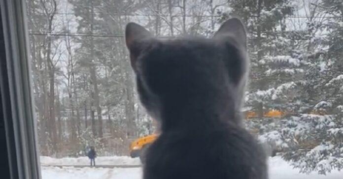 gattino attesa alla finestra