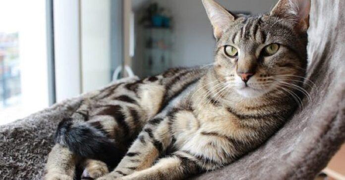 gattino celtico vuole vedere funziona frullatore fuga
