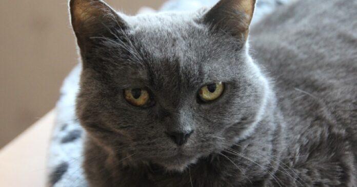 gattino certosino diventa protagonista video sua insaputa