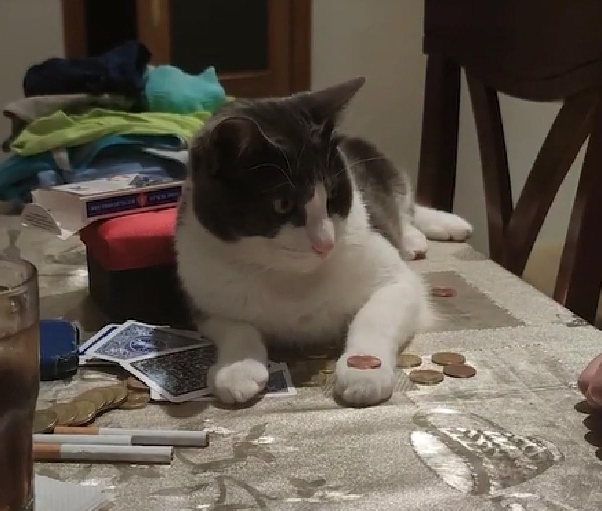 chupi gattino osserva trucco