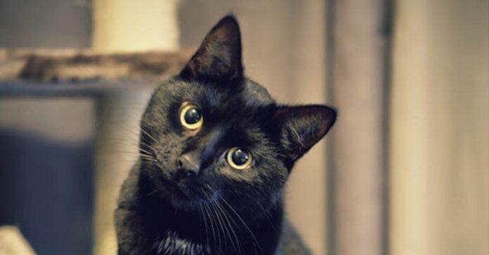 gattino dispettoso mamma