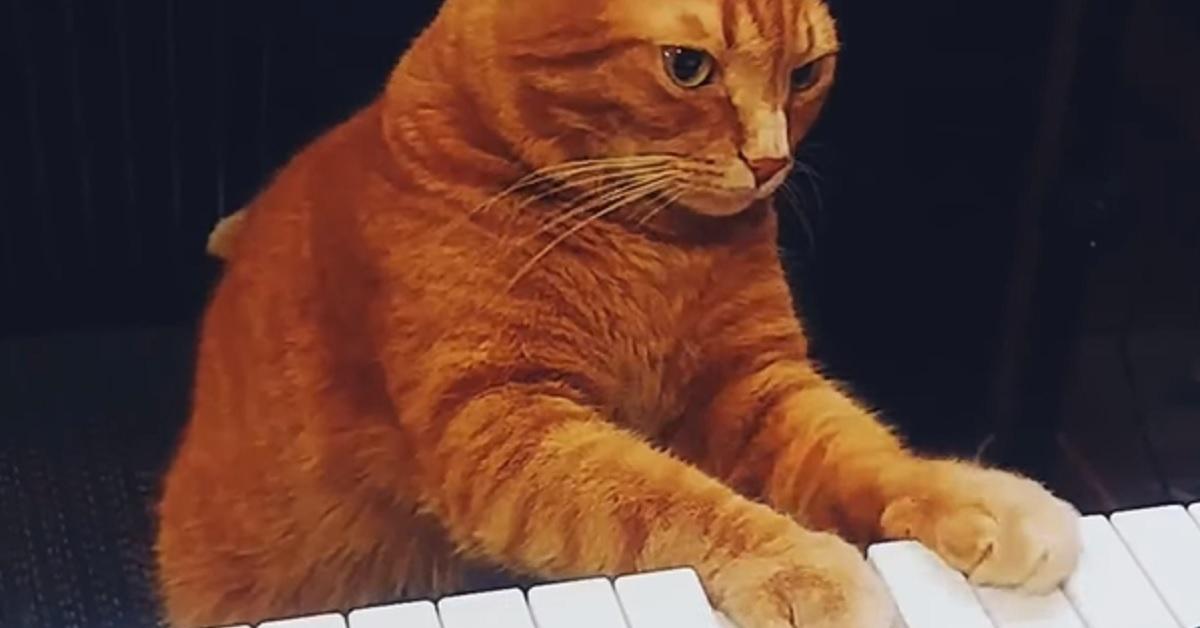 micetto talento musica