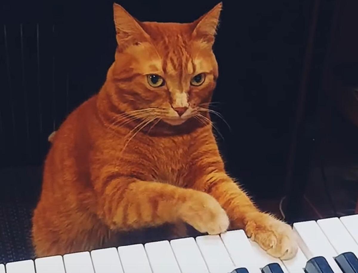 gatto musica tasti