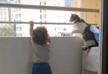 gattino salva il fratellino umano
