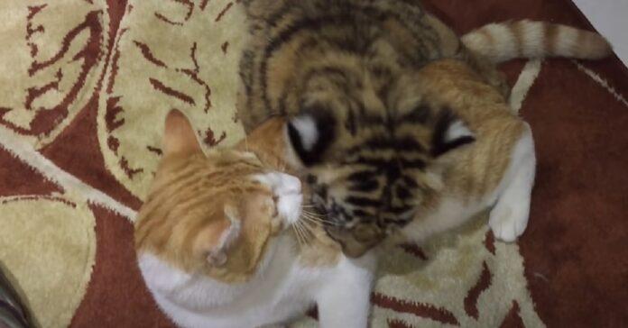gattino tigrotto amico