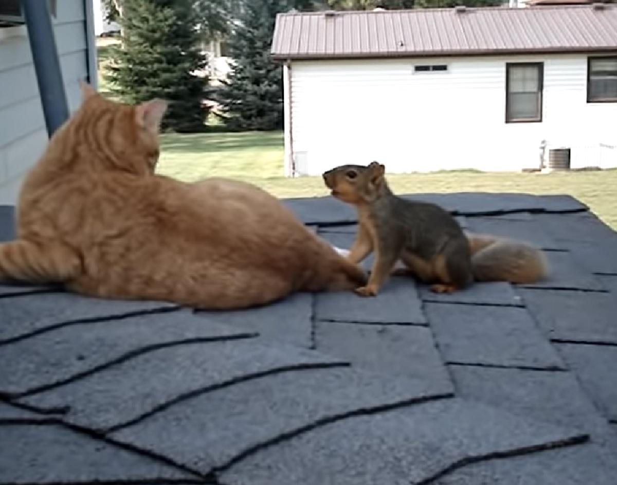 gattino scoiattolo valore amicizia