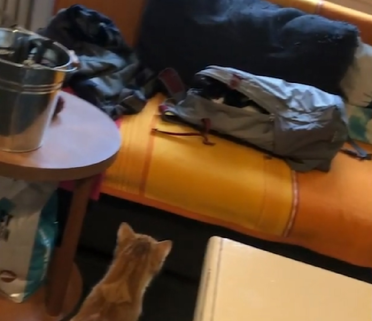 findus pattersson fratelli gatti