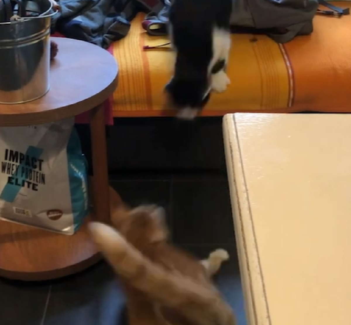 findus pattersson gattini mamma registra