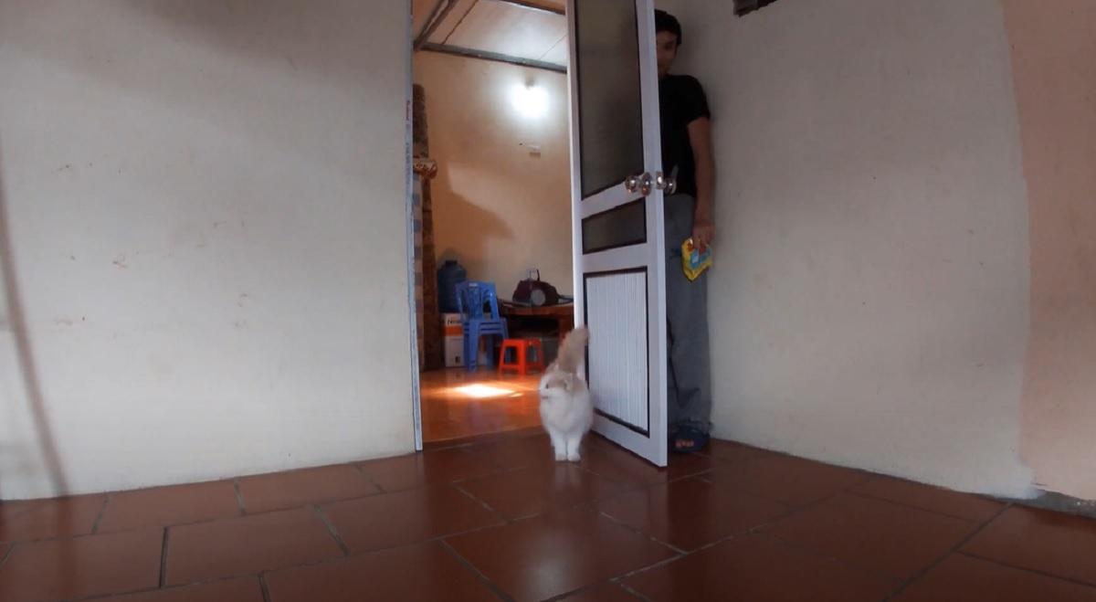 gatto papà nascosto