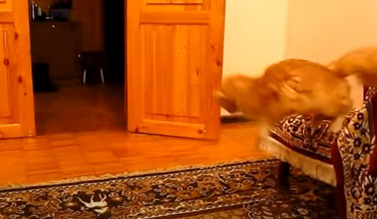 gatto salta aria