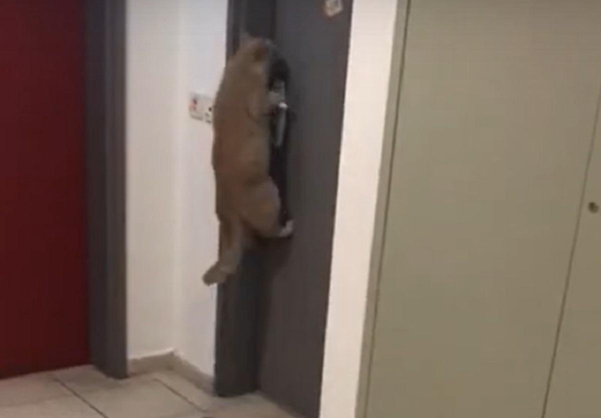 entrare casa porta