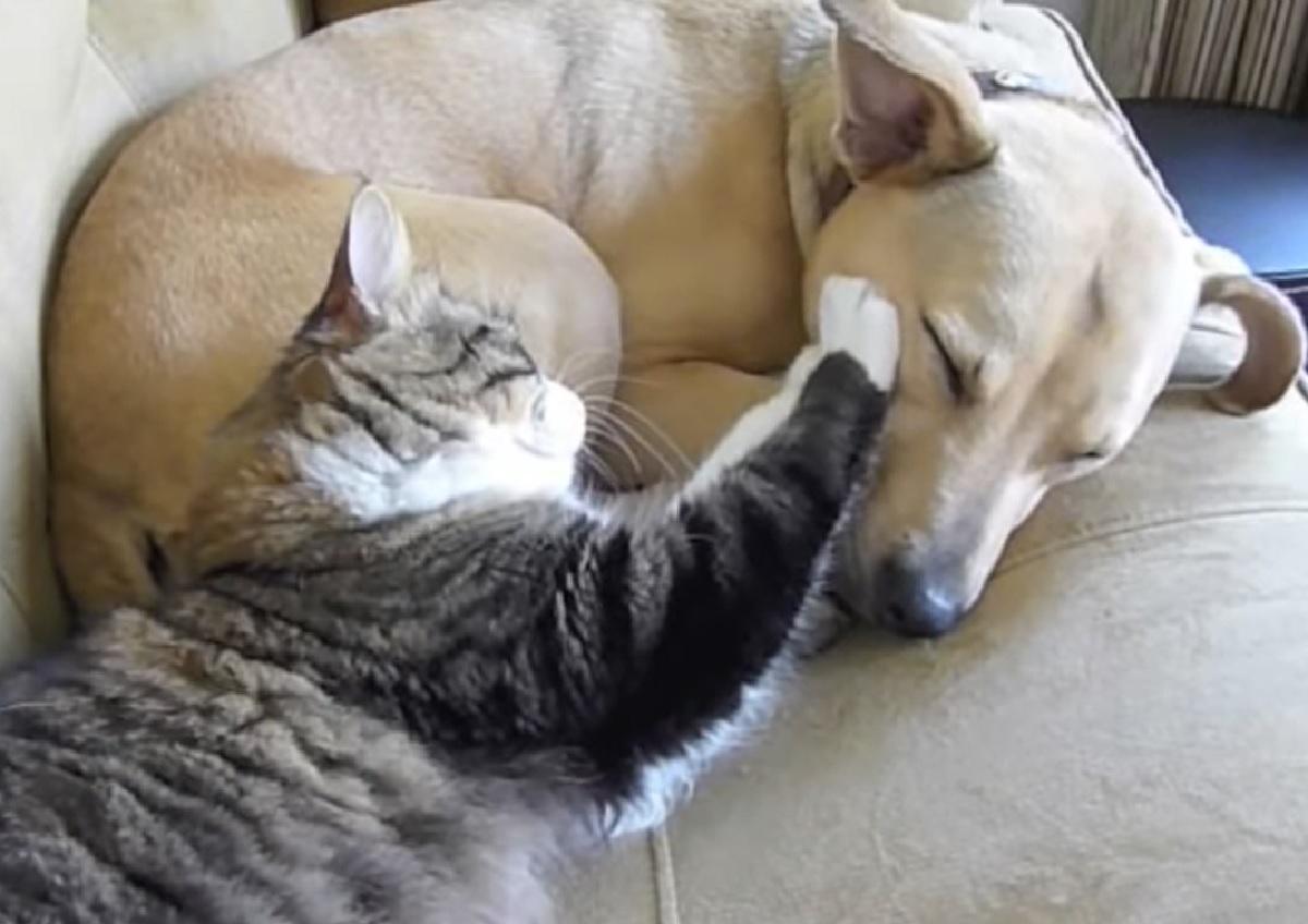 stewart gattino amore cucciolo cane