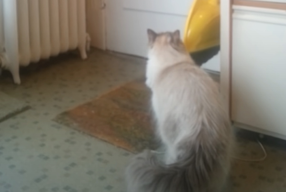 gatto attesa porta