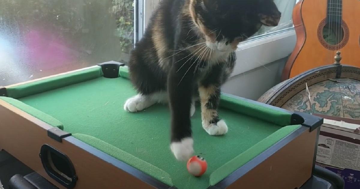 gattino micio biglia