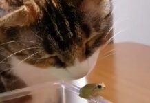 gattino piccola rana