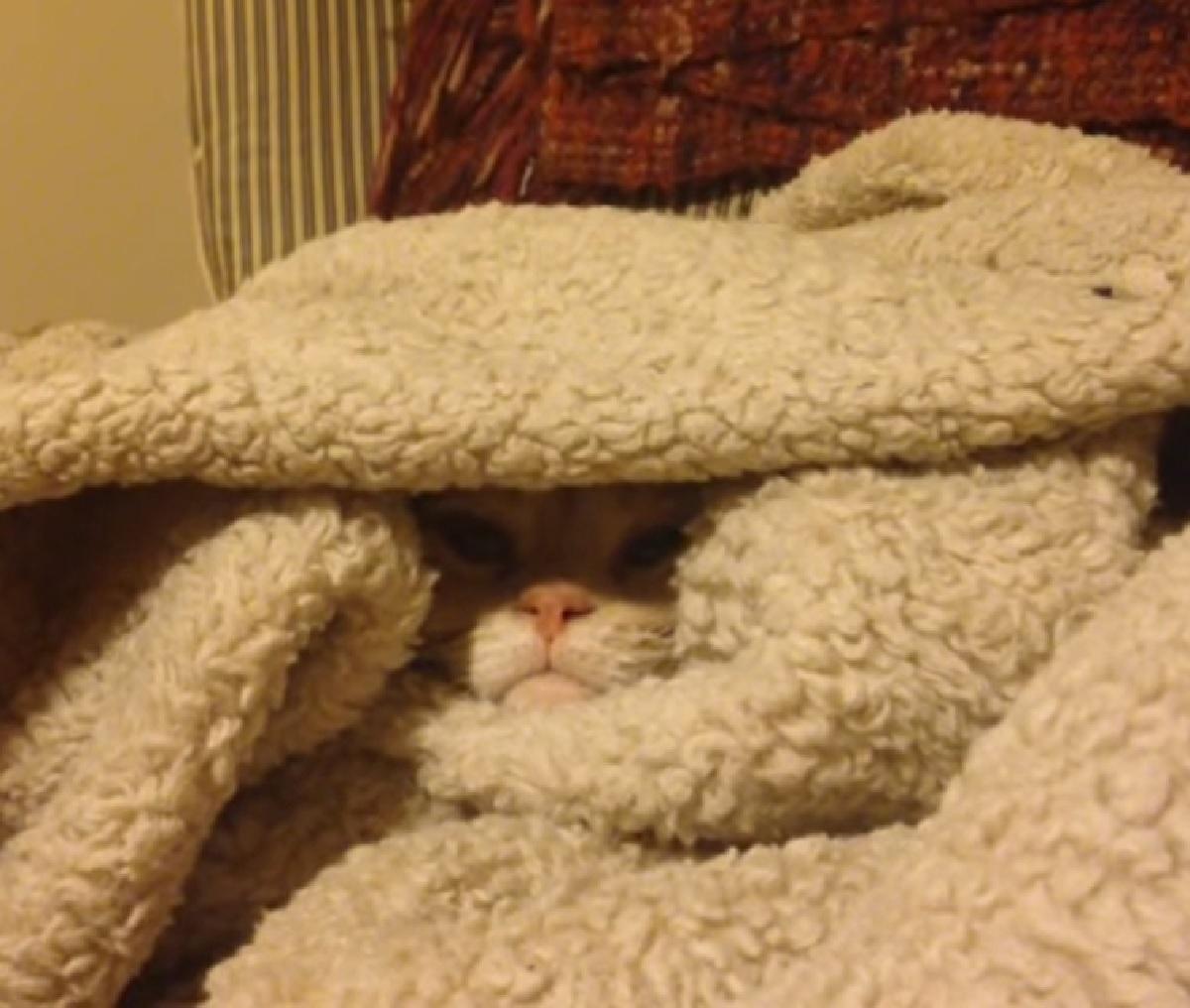 nugget gattino sotto le coperte relax