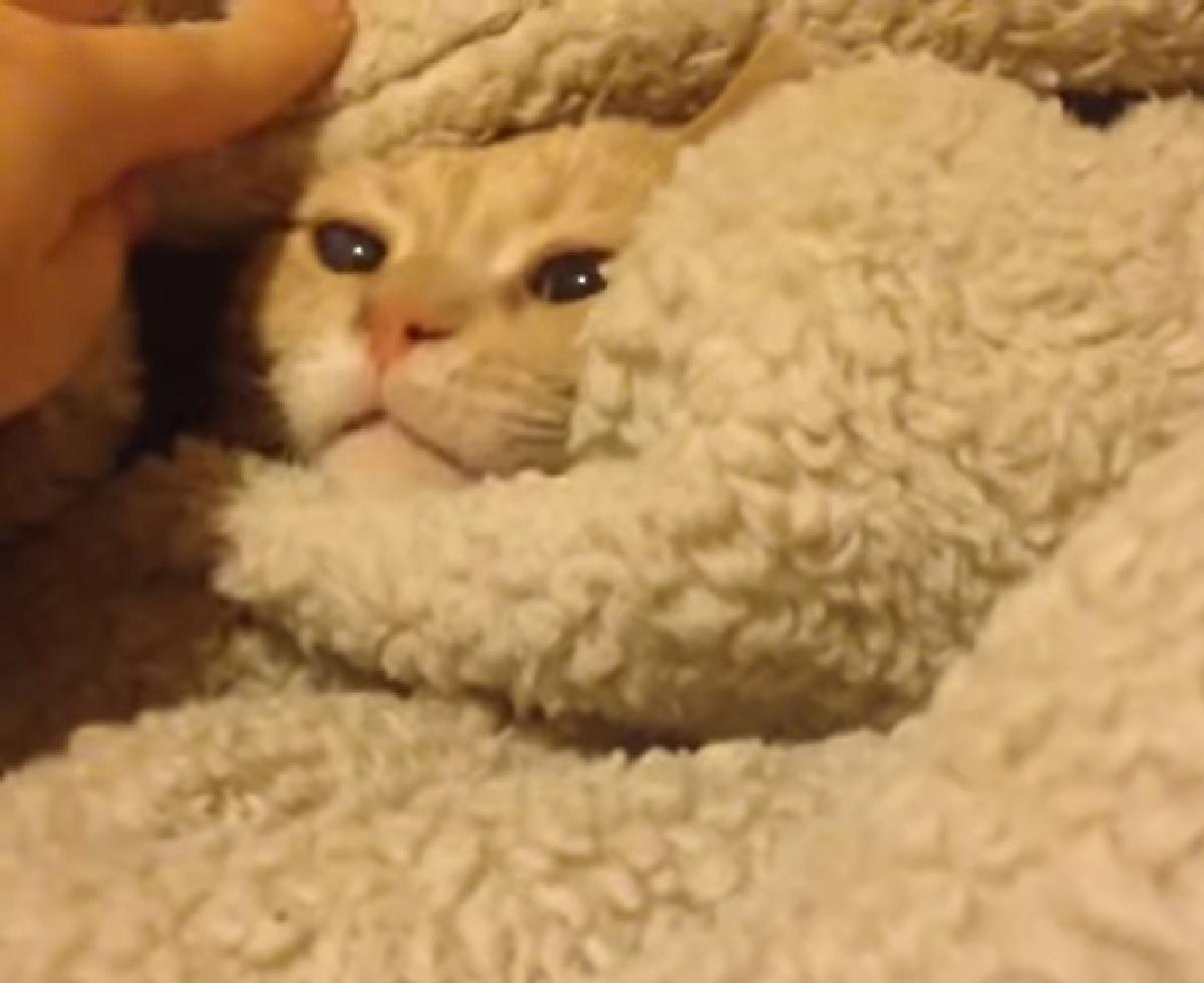 nugget gattino smosso madre
