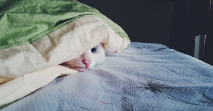 gattino si trova sotto coperte mamma decide realizzare video