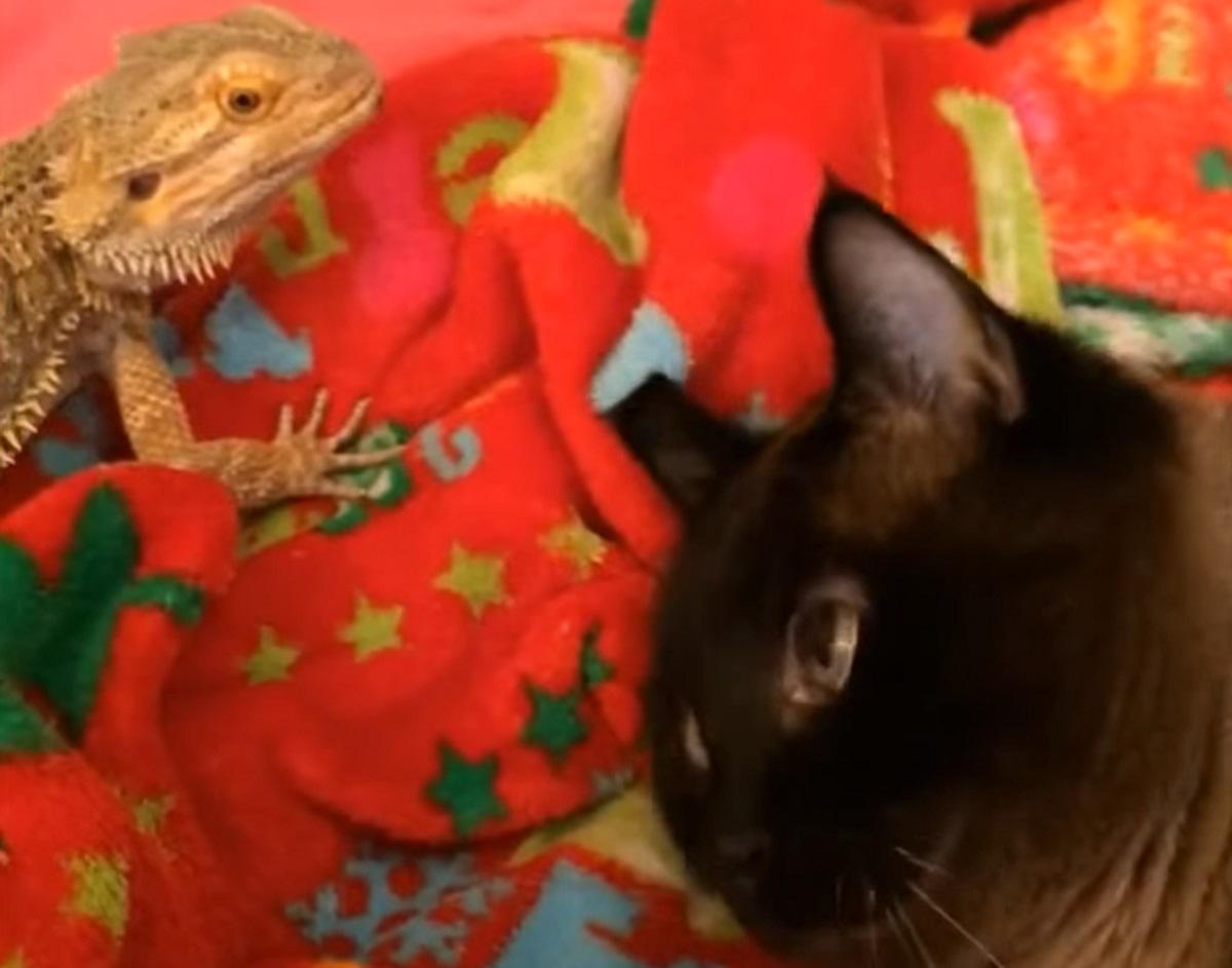 gatto rettile amici