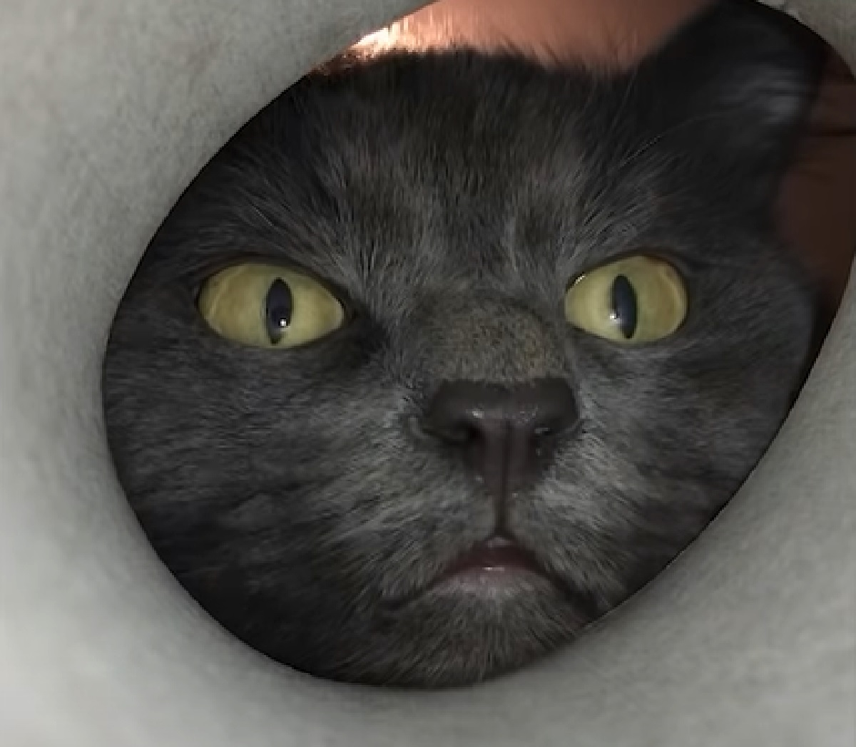 simon gattino fame assurda piena notte
