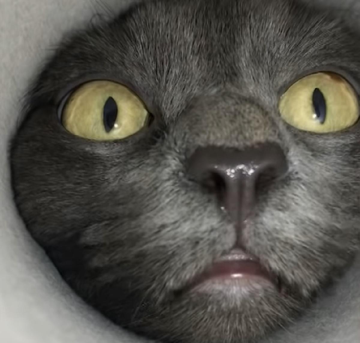 simon gattino riprese dal basso