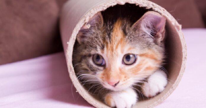 gattino simon famelica voglia d cibo video