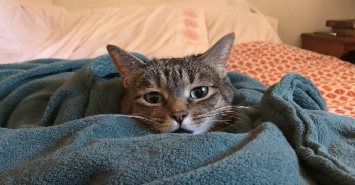 gattino soriano sotto coperte riscaldate video tenero