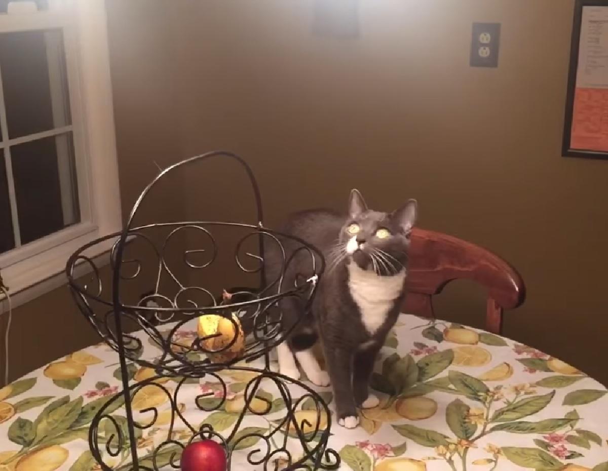 gattino tuxedo idea lampadario
