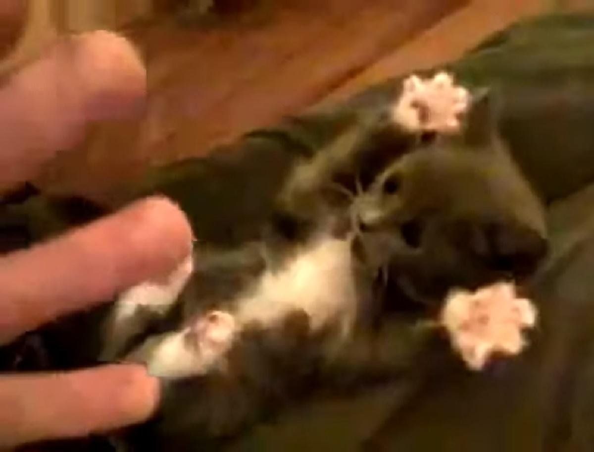 gattino tuxedo movimento stella