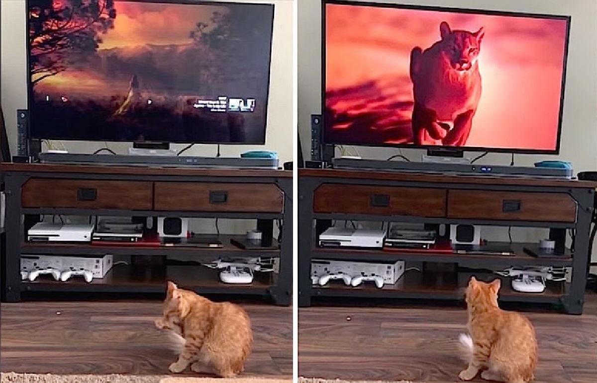 gattino paura tv