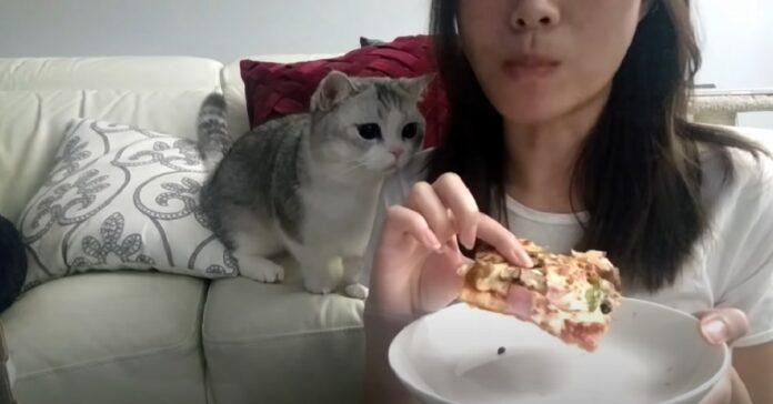 gattino pizza rubare