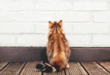 gatto contro il muro