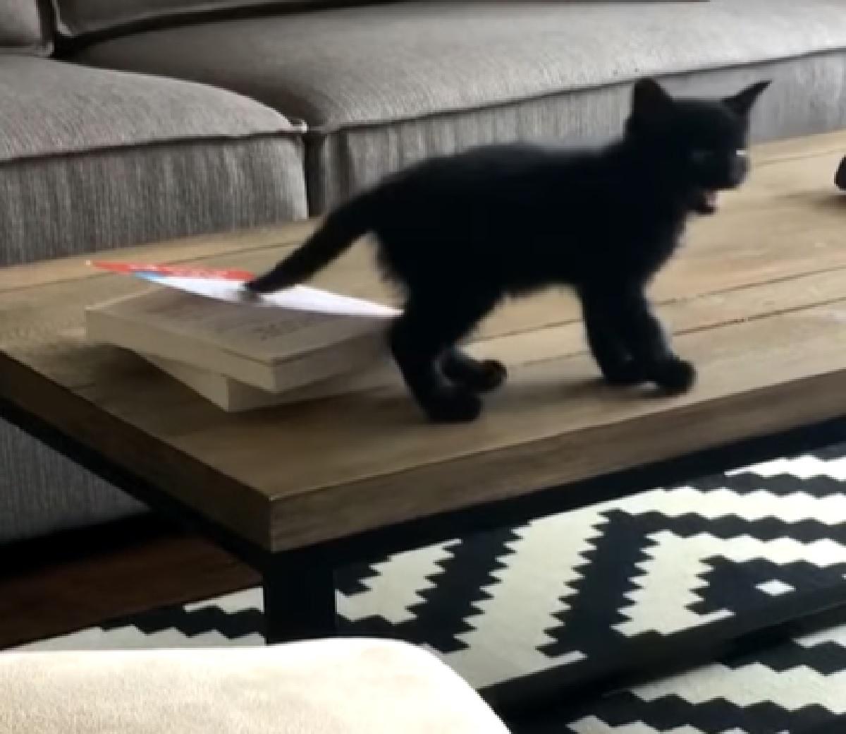 mickey gattino cerca di raggiungere scopo