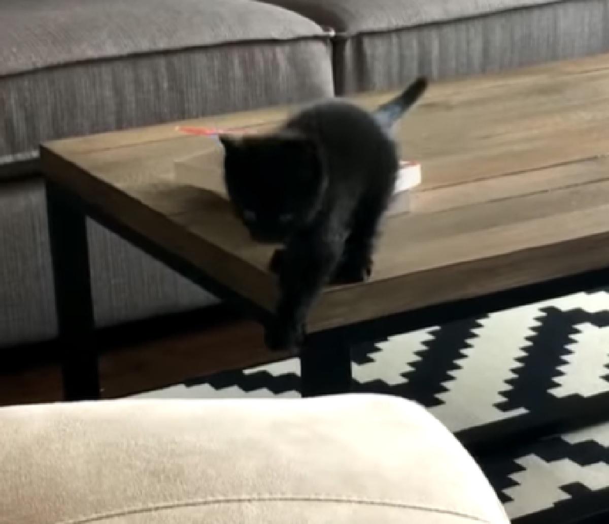 mickey gattino salto nel vuoto