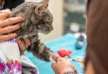 fare prelievo di sangue al gatto