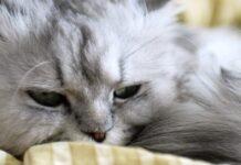 gatto annoiato