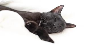 gatto nero addormentato