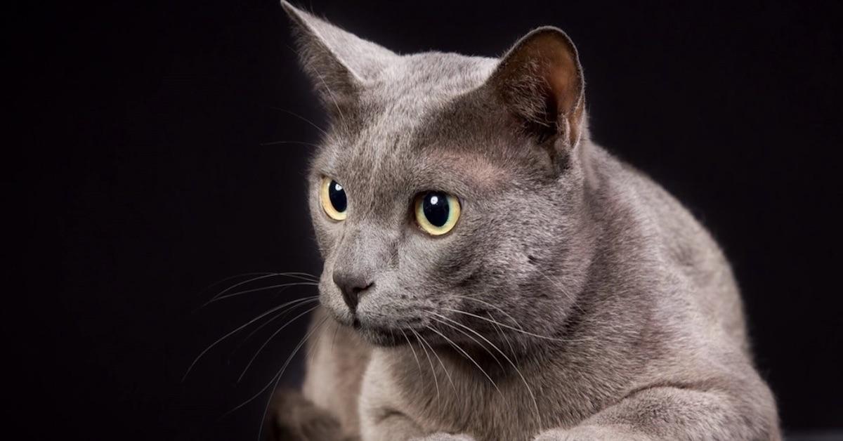 gatto occhi dolci