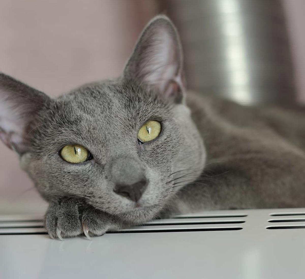 gatto calmo