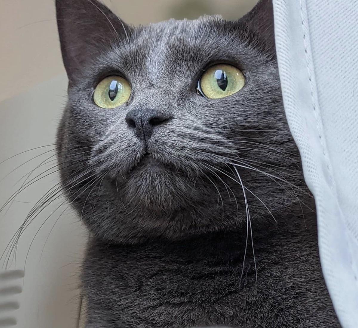 gatto occhi chiari