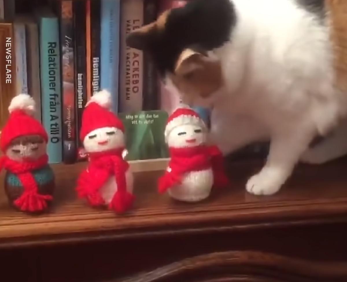 gattina calico amore per oggetti natale