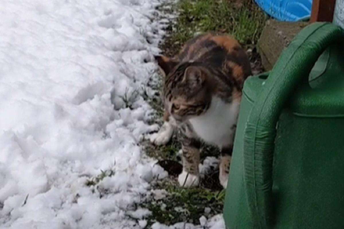 micio prima neve