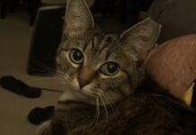 gattina soriano risponde modo particolare quando le viene chiesto se ha fame video