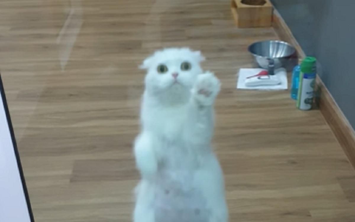 saluta mamma gattina