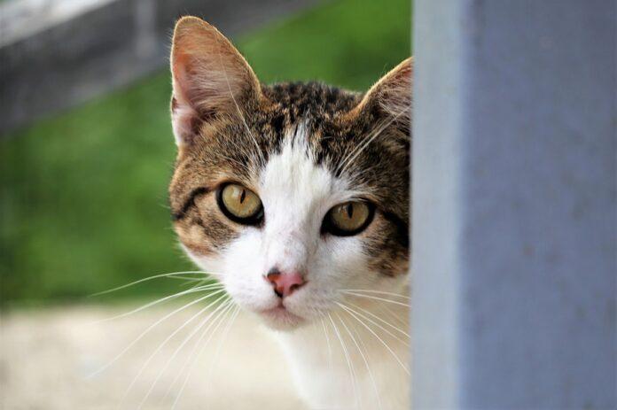 gattino ventilatore micio