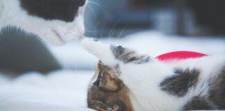 sono nati i gattini
