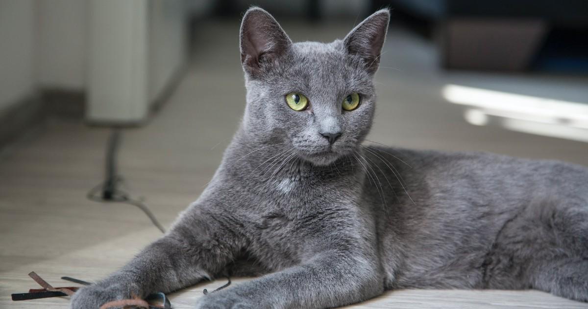 gattino che fissa il vuoto