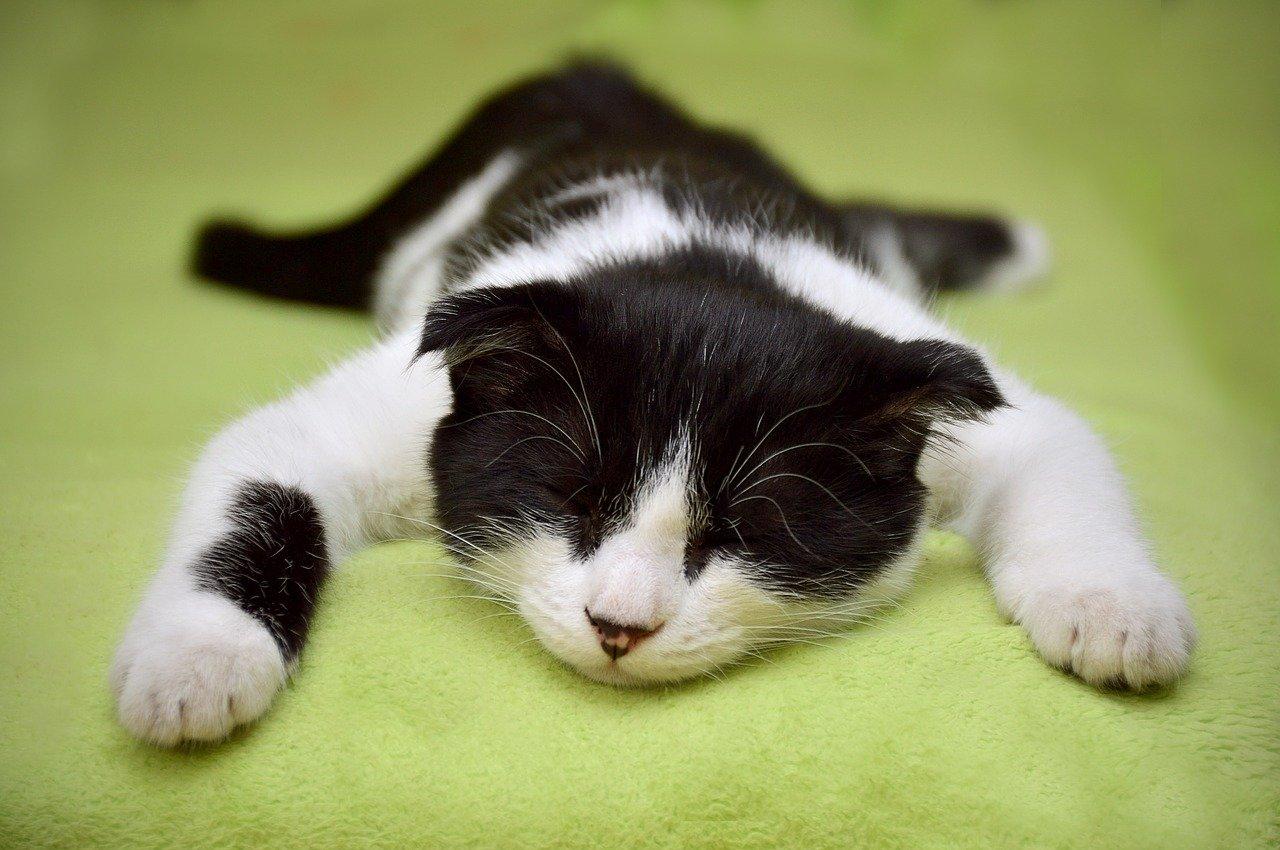 gatto dorme rilassato