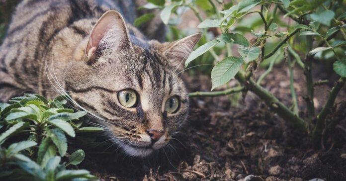 gatto caccia qualcuno