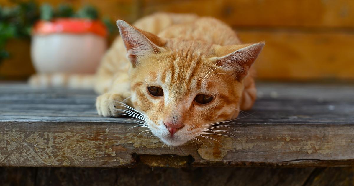 gatto arancione con l'espressione triste